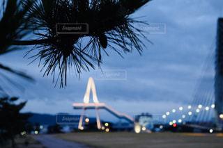 飛行機は、ヤシの木の横にある道路の脇に駐車の写真・画像素材[810420]