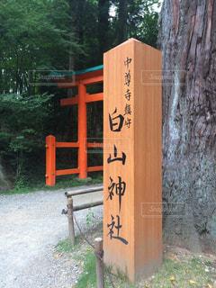 立派な中尊寺の写真・画像素材[765328]
