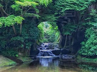 濃溝の滝の写真・画像素材[1002227]