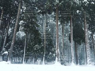 冬の森の写真・画像素材[774185]