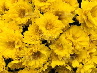 近くの花のアップの写真・画像素材[875170]