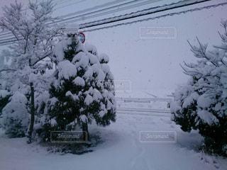 雪の写真・画像素材[935503]