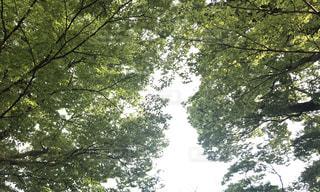 近くの木のアップの写真・画像素材[1198232]