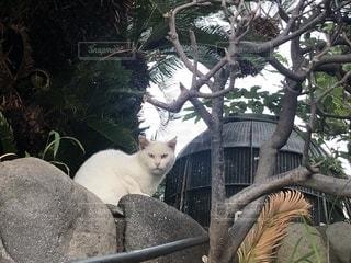 座っている猫の写真・画像素材[1458043]
