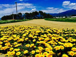 田子の浦から富士山の写真・画像素材[766535]