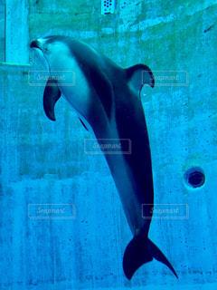 イルカの写真・画像素材[769216]