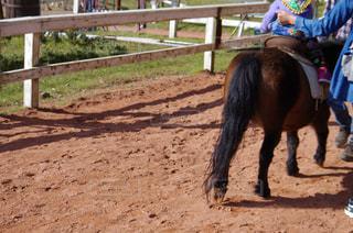 汚れで馬に乗る男の写真・画像素材[772342]