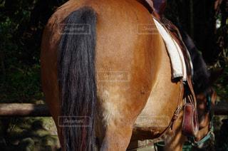 近くに馬のアップの写真・画像素材[772343]