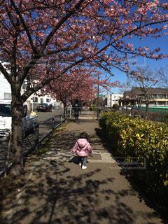 お散歩の写真・画像素材[824424]