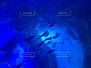 水族館の一コマの写真・画像素材[1003507]