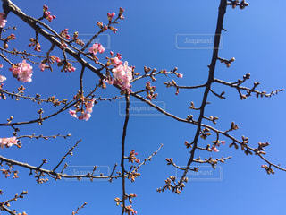春が来た☆の写真・画像素材[1012699]