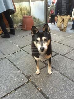 歩道に犬の写真・画像素材[1023442]