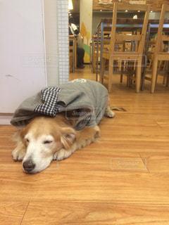 お昼寝看板犬の写真・画像素材[1023446]