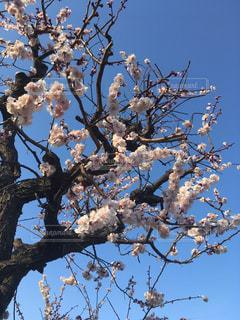 木の枝にとまった鳥の写真・画像素材[1034453]