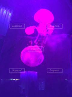 クラゲの水槽の写真・画像素材[1637274]