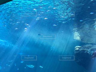 大好きな水槽❤️の写真・画像素材[2117570]