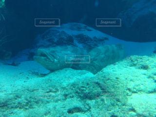 仲良し魚の写真・画像素材[2117571]