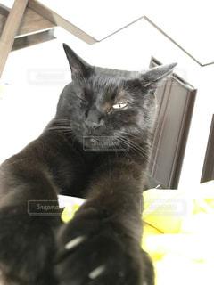 片目を開ける猫の写真・画像素材[766910]