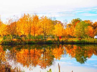 湖の中の森 - No.769684