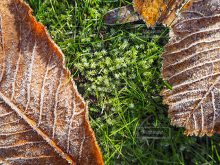 霜の写真・画像素材[769703]