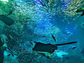 水中の写真・画像素材[773599]