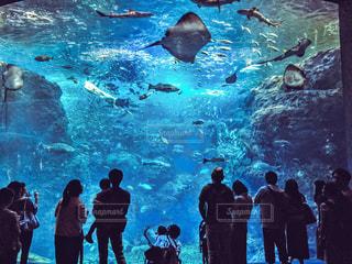 水中の写真・画像素材[773601]