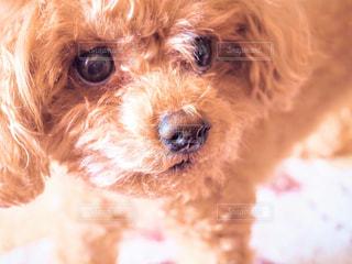 愛犬の写真・画像素材[778626]