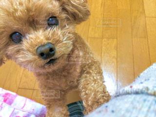 愛犬の写真・画像素材[779349]