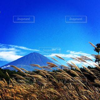 富士山 - No.779481