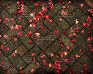 落ち葉の星 - No.779502