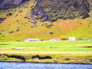 アイスランドの羊 - No.789490
