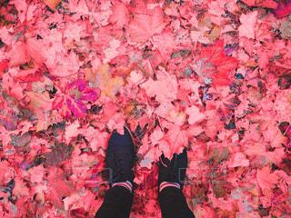 落ち葉の絨毯の写真・画像素材[790188]