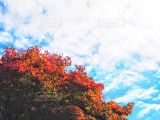 赤と青の写真・画像素材[790448]