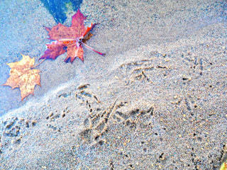 水辺の足跡の写真・画像素材[793514]