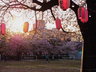 桜の写真・画像素材[890511]
