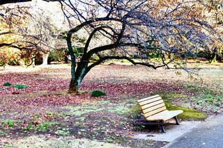 公園の真ん中に座っている木製のベンチ - No.891103