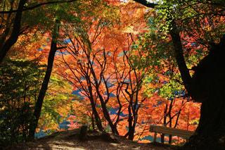 室池園地の紅葉の写真・画像素材[769927]