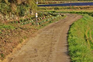 山辺の道の写真・画像素材[777843]