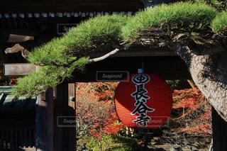 長谷寺山門の写真・画像素材[777848]