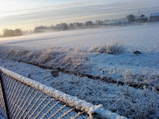 霜に覆われたせかいの写真・画像素材[768071]
