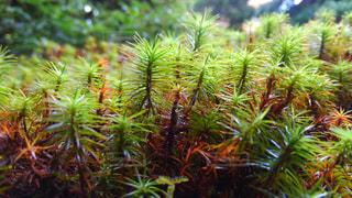 植物の木の成長 - No.773716