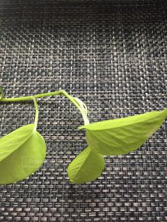 近くに緑の葉のアップの写真・画像素材[768202]