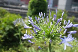 近くの花のアップの写真・画像素材[773087]