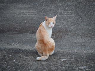地面に座ってオレンジと白猫の写真・画像素材[768315]