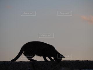 背景の夕日と鳥の写真・画像素材[768317]