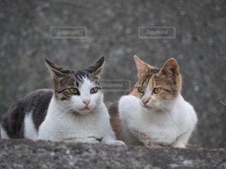 白い面の上に座って猫の写真・画像素材[768320]