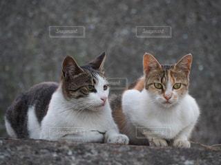 白い面の上に座って猫の写真・画像素材[768321]