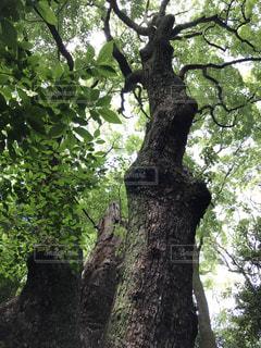 大きな木の写真・画像素材[769236]