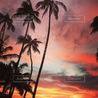 日没の前にヤシの木の写真・画像素材[769180]