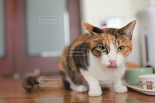 テーブルの上に座って猫 - No.769320